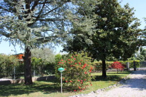 giardino 04