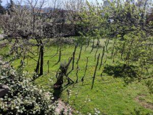 giardino-vigna